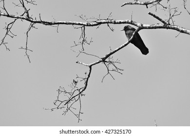 A crow sits on a branch.