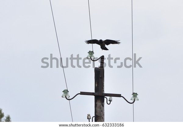 The crow sits on a pole with electric wires