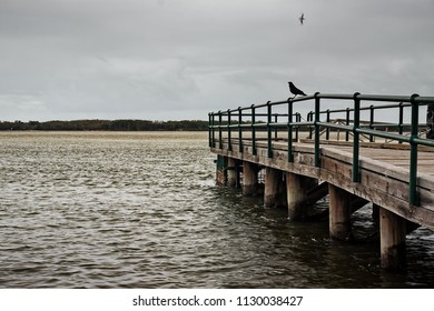 A crow sits on a railing of a pier in Caloundra, Queensland, Australia. The day is not as sunny as you would expect in Queensland.