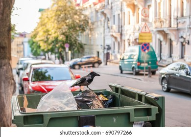 A crow sitting on the dumpster looking for food in garbage
