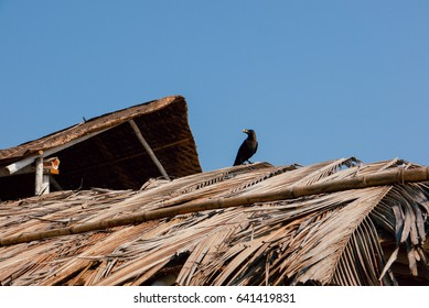 crow sitting on the roof of a tropical hut or bungalow