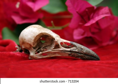 Crow Skull on red velvet with pink bougainvillea flowers and green leafs