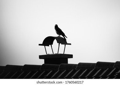Crow standing on a chimney