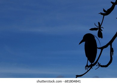 The Crow Stands on The Top of tree, Bird Silhette. Blue sky.
