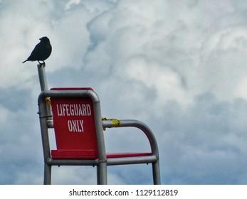 Crow watching like a baywatch