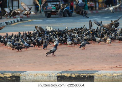 Crowd of pigeon on the walking street in Bangkok, Thailand. Blurred group of pigeons fight over for food, many struggle pigeons near temple in Thailand. Selective focus