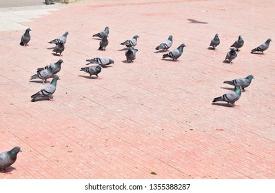 Crowd of pigeons on the walking street. Pigeons eating food on the pavement. Pigeons carry pathogens that spread and transmit diseases.