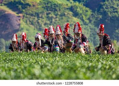 Crowd of tea picker picking tea leaf on plantation.