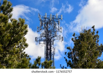Crowded Full Cell Tower on a Sunny Day with Pine Trees