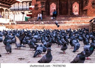 the crowded pigeons in Nepal