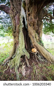 Crowhurst Churchyard in East Sussex, England has several yew trees. This relatively young tree is being used as part of the local Halloween celebrations. A sinister, grinning pumpkin has appeared.