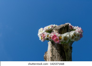 The crown of daisy (Bellis perennis) flowers is hanged on an old tree trunk. Blue sky background. Summer solstice - Midsummer Day. Ligo night.