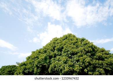 the crown of a green tree under blue sky