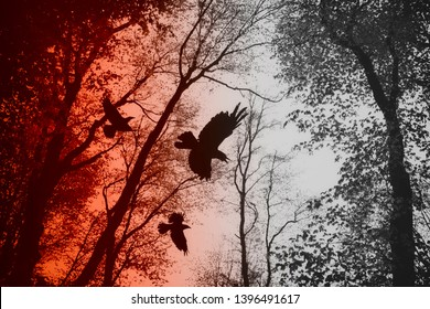 crows flying in forest between tree branches, dark scary horror scene
