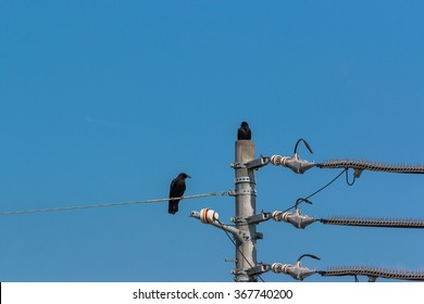 Crows on electrical wires against blue cloudless sky.