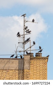 Crows On Old TV Antenna. Crows sitting on antenna