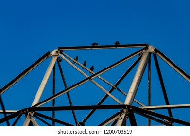 Crows on a steel electrical power tower with a blue sky