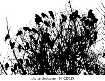A lot of crows sitting on a leafless tree. Black and white