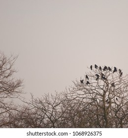 Crows sitting on treetop with the sky in the background.