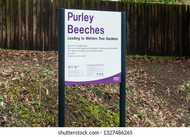 Croydon, United Kingdom - March 03, 2019: Purley Beeches park with a large large number of young and mature Beech trees