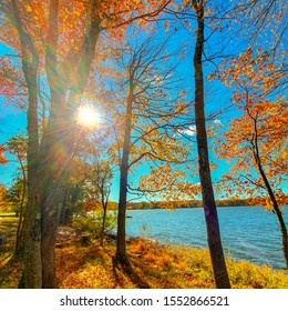 A crsip autumn day by lake with the sun shining through the orange leaves