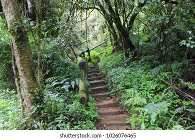 Crude steps leading into lush forest