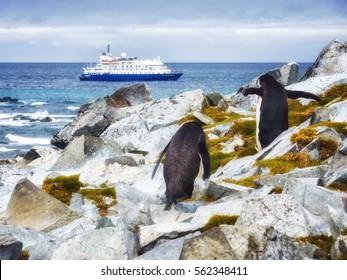 Cruise ship and Chinstrap penguin (Pygoscelis antarctica) at  Antarctica