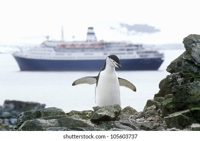 Cruise ship Marco Polo and Chinstrap penguin (Pygoscelis antarctica) at Half Moon Island, Bransfield Strait, Antarctica