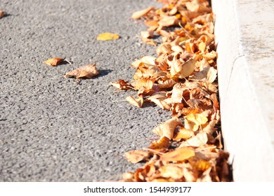 crunchy autumn leaves at roadside