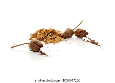 Crushed and dried tobacco leaves and tobacco seeds. Isolated on white background.