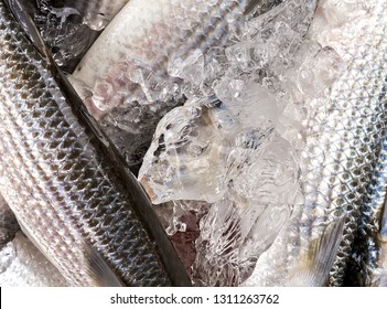 Crushed ice fresh fish seabass in the market Top view