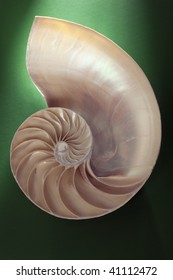 Crustacean shell cross section representing evolution, growth and change on a green background