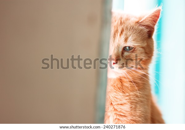 Crying cat. Emotional portrait of red-haired pet in tears. Depressive mood. Loneliness, sadness