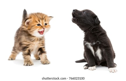 Crying kitten and puppy isolated on white background