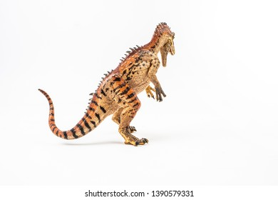 Cryolophosaurus  , Dinosaur on white background    .
