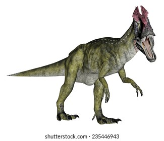 Cryolophosaurus dinosaur walking in white background- 3D render