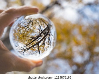 Crystal ball and autumn. Mirroring birch in the ball. in Sumava national park (Bohemian Forest) in autumn. Czech republic,