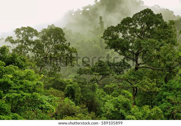 À Crystal Cascades près de Cairns, Queensland, Australie