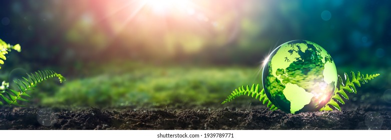 Crystal Earth On Soil In Forest With Ferns And Sunlight - The Environment - Earth Day Concept