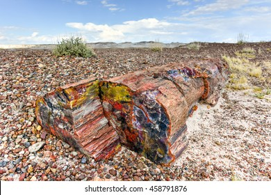 The Crystal Forest in the Petrified Forest National Park in Arizona.