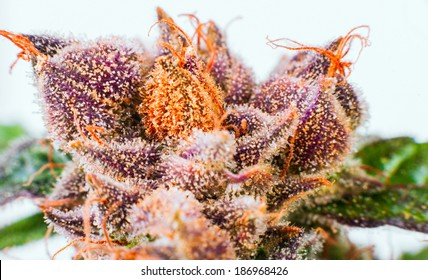 Crystals ripe flowers macro marijuana THC