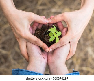 CSR go green, arbor (Tu Bishvat/Tu B'Shevat) day and world environment protection concept with volunteer planting young tree bud growing on soil in community together people's heart-shaped hands
