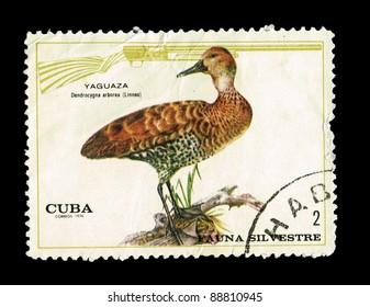 CUBA - CIRCA 1970: A stamp printed in Cuba shows a Yaguaza,  circa 1970