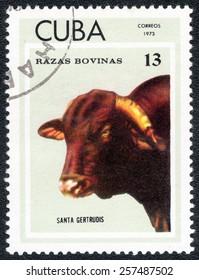 "CUBA - CIRCA 1973: A Stamp printed in CUBA shows series ""Thoroughbred Cows"" image SANTA GERTRUDIS , circa 1973"