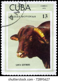 """CUBA - CIRCA 1973: A Stamp printed in Cuba shows image of a Cow Santa Gertrudis from the series """"Thoroughbred Cows"""", circa 1973"""