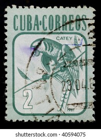 CUBA - CIRCA 1981: Parrot on old canceled postage stamp, circa 1981