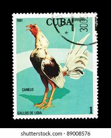 CUBA - CIRCA 1981: A stamp printed in the CUBA, shows gallos de lidia Canelo,  circa 1981