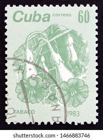 """CUBA - CIRCA 1983: A stamp printed in Cuba from the """"Flowers"""" issue shows Cultivated tobacco (Nicotiana tabacum), circa 1983."""