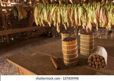 Cuban cigars in drying house, Vinales, Cuba