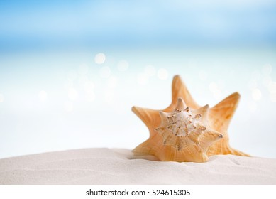 cuban shell on white Florida beach sand under sun light, shallow dof